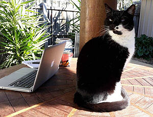 Cat sitting next to a laptop
